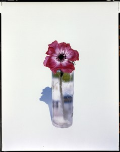 YOSHIHIKO UEDA《FLOWERS FLW-002, 1996》1996/2000, ED 1/10, 91.8 x 73.1 cm, 36 1/8 x 28 3/4 in., type C-print