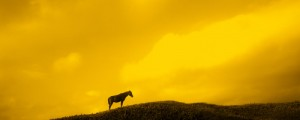 "LIM CHAE WOOK ""Mind spectrum_The Horse"" 2008, ED 100, 24 x 60 cm, 9 2/5 x 23 3/5 in., archival pigment print"